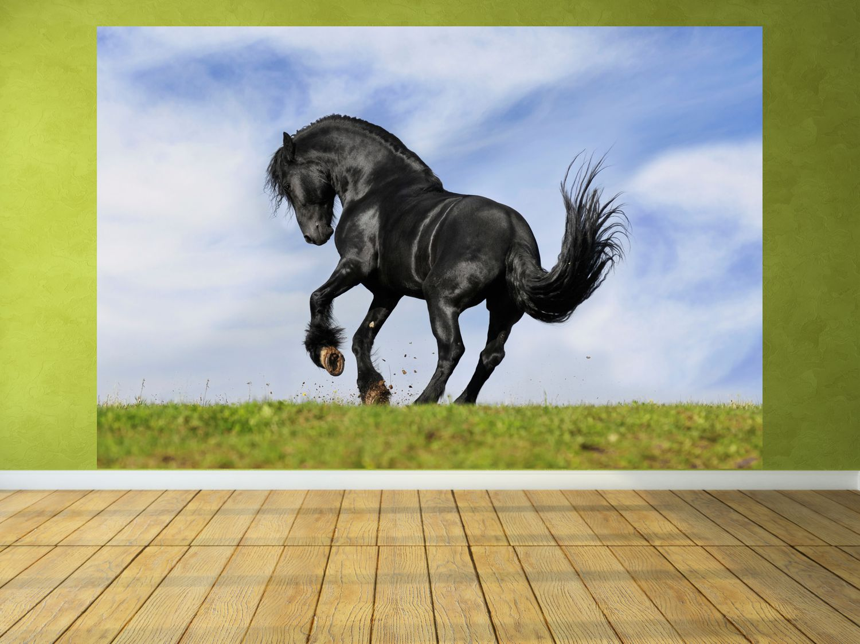 fototapete mit pferden amilton. Black Bedroom Furniture Sets. Home Design Ideas